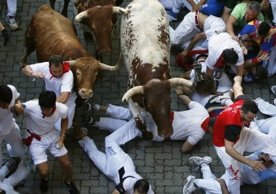 Runners fall in the path of an Alcurrucen fighting bull and steers during the San Fermin festival in Pamplona