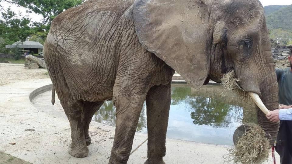 ruperta the elephant venezuela mh